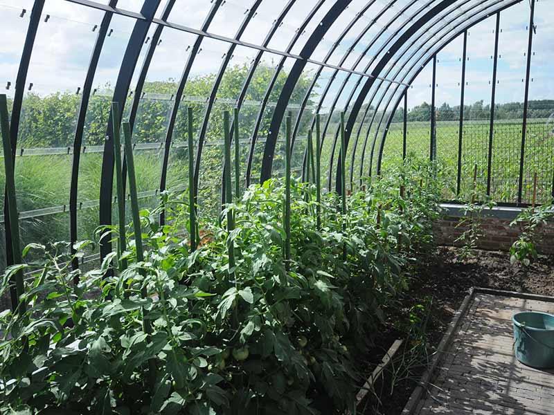 tomatenplanten kweken in tuinserre van dbg classics