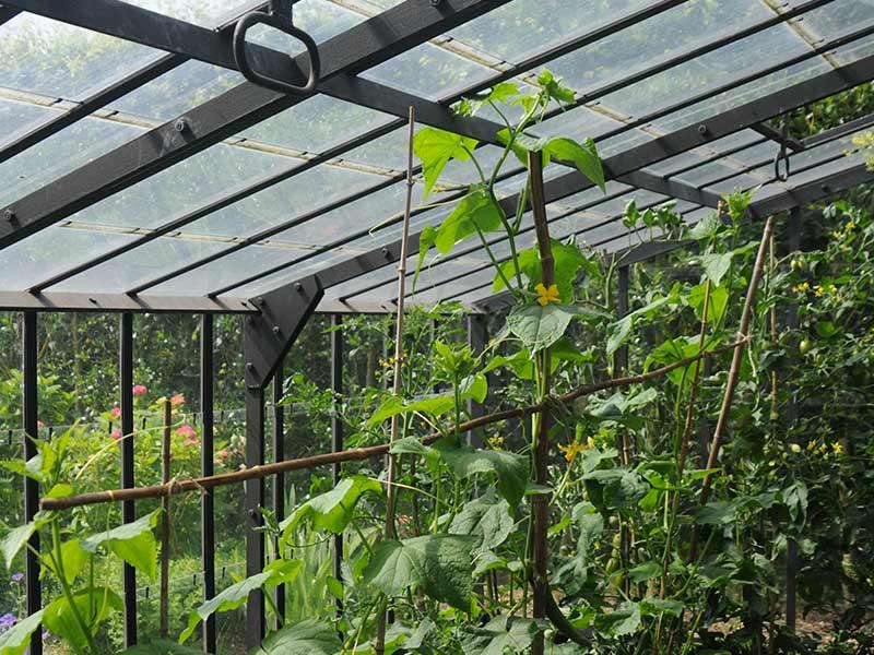 binnenkant muurserre planten en smeedijzeren dakgeraamte dbg classics