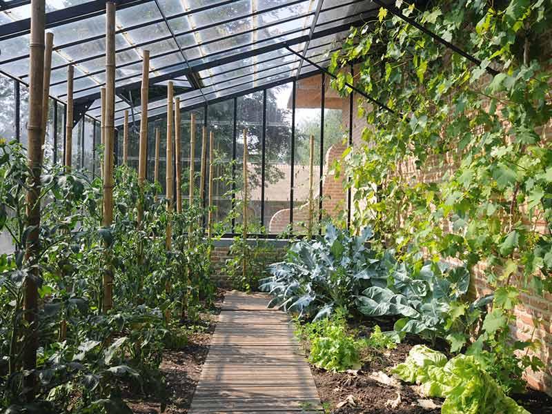 tomatenplanten koolplanten wijnranken geteeld in authentieke smeedijzeren serre dbg classics