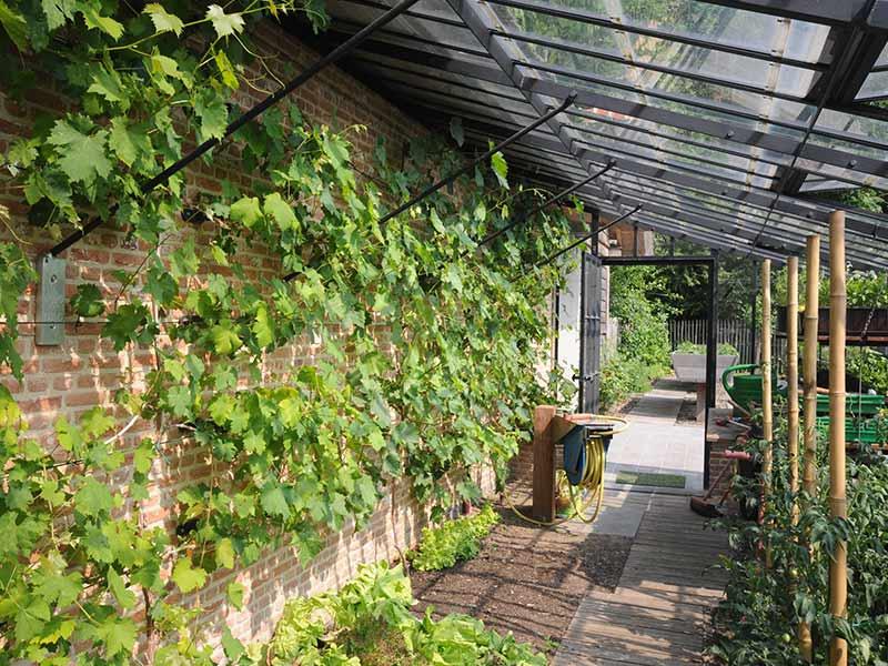 wijnranken op zijmuur in aanbouwserre met smeedijzeren ornamenten dakspanten dbg classics